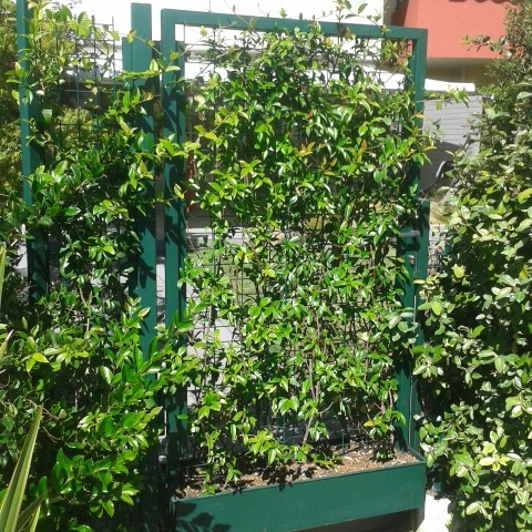 Bespoke Metal Flower Pot Gate in Biot