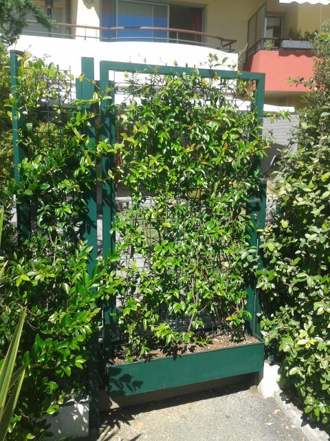 Bespoke gate with integrated planter in Biot