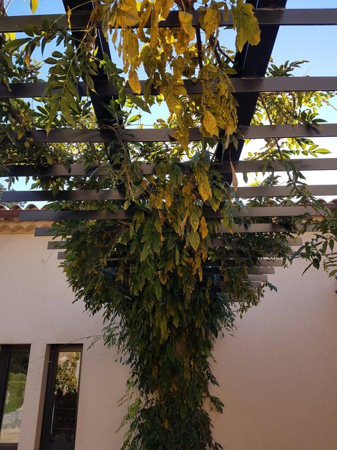 Vine Arbor (2)